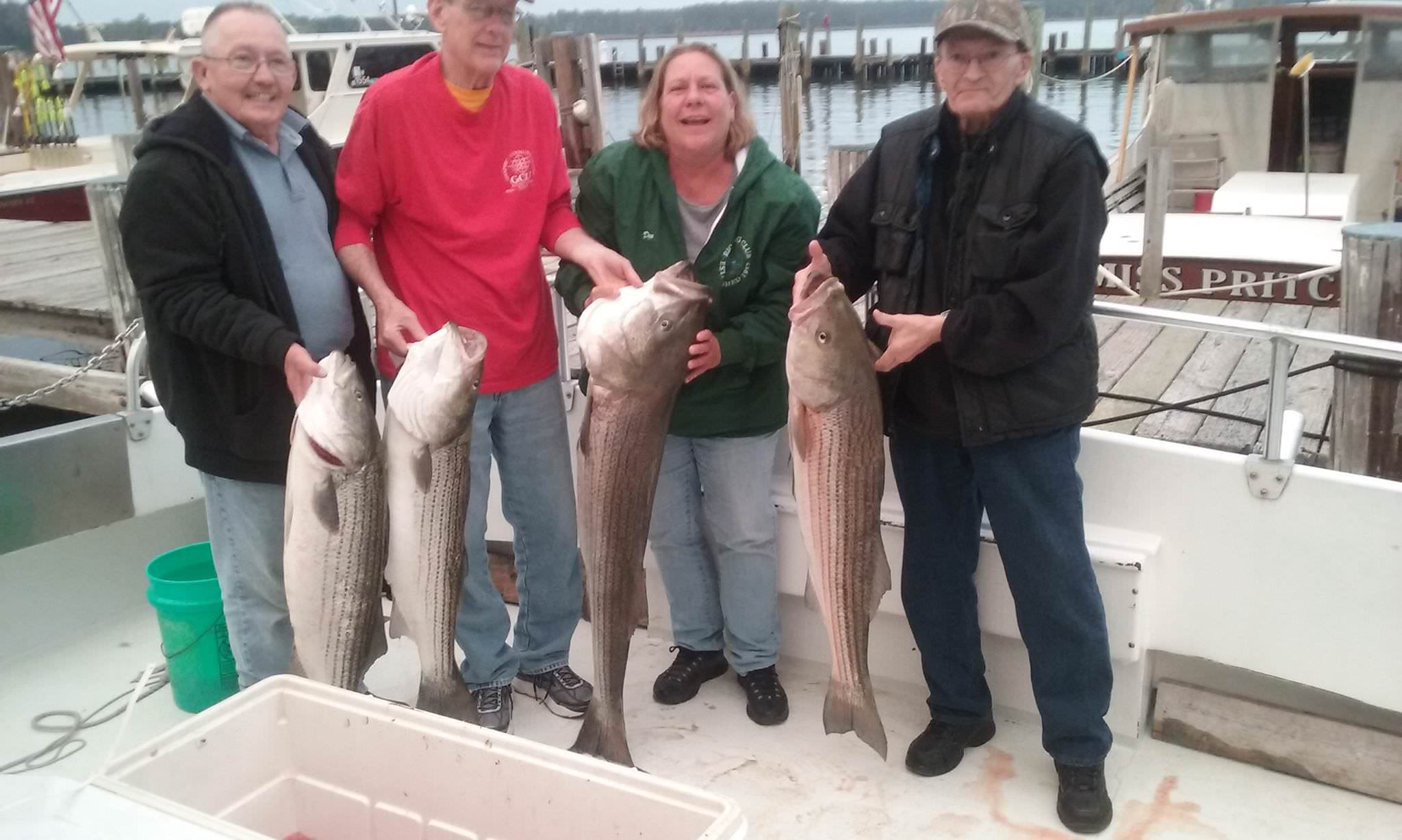 Four Monster Rockfish From The Chesapeake Bay!