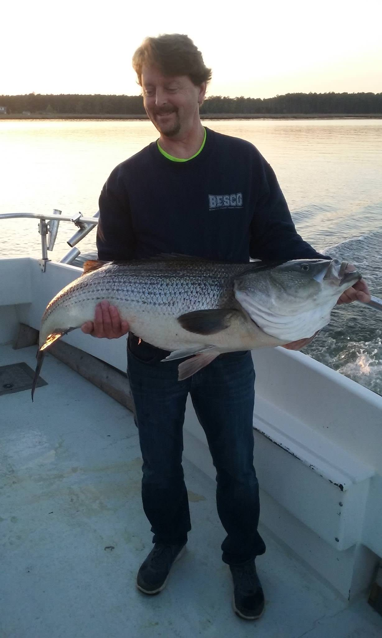 Massive 47-Inch Chesapeake Bay Rockfish