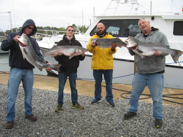 Chesapeake Bay Charter Fishing For Big Trophy Rockfish!