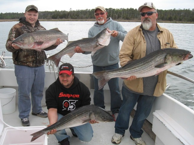 Four BIG Rockfish Caught On The Chesapeake Bay!