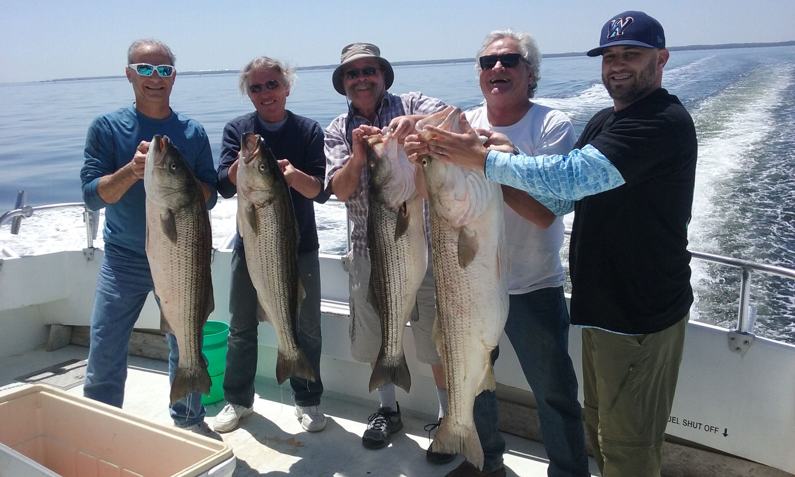 Mammoth Chesapeake Bay Rockfish!